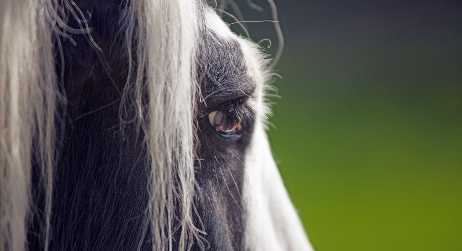 Naturheilpraxis für Tiere Petra Hüttner - Kontakt