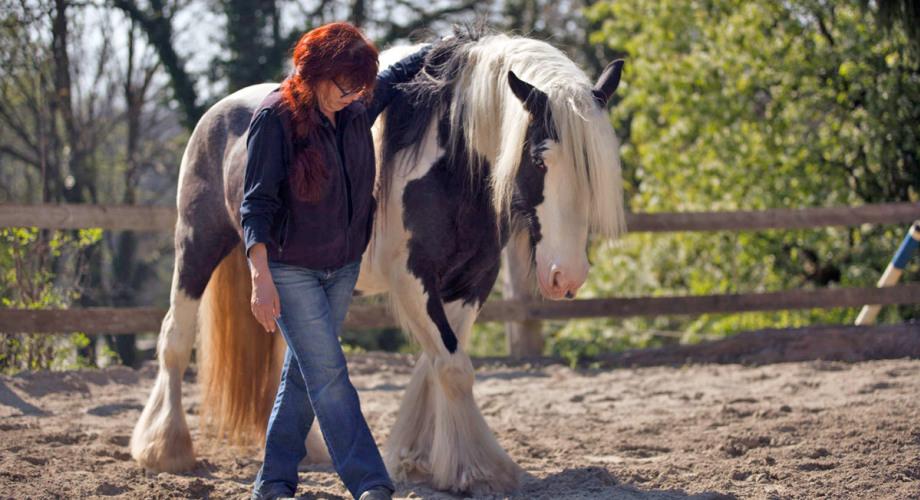 Naturheilpraxis für Tiere Petra Hüttner - So arbeite ich